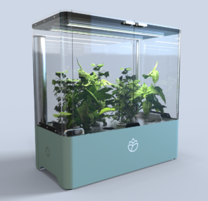 Det smarta miniväxthuset Plaant där du kan odla kryddor, blommor och växter året runt.